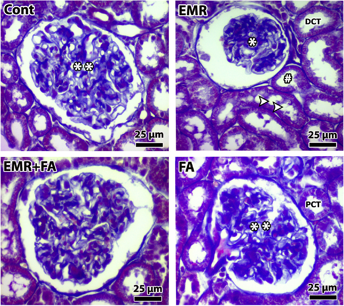 Effects Of Folic Acid On Rat Kidney Exposed To 900 Mhz