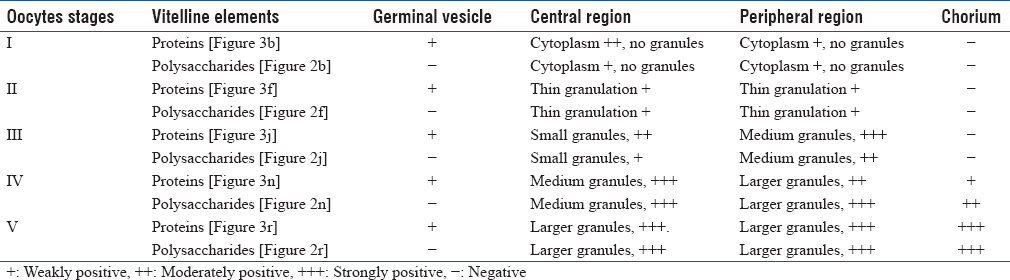 Table 2: Histochemistry results of ovary of the tick <i>Rhipicephalus sanguineus</i> of Group III