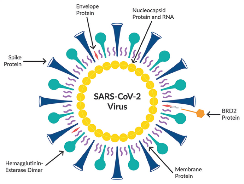 Figure 1: Genomic structure of severe acute respiratory syndrome coronavirus 2